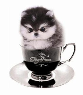 tea-cup-tiny-paws-01