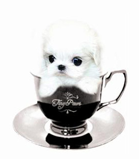 tea-cup-tiny-paws-04